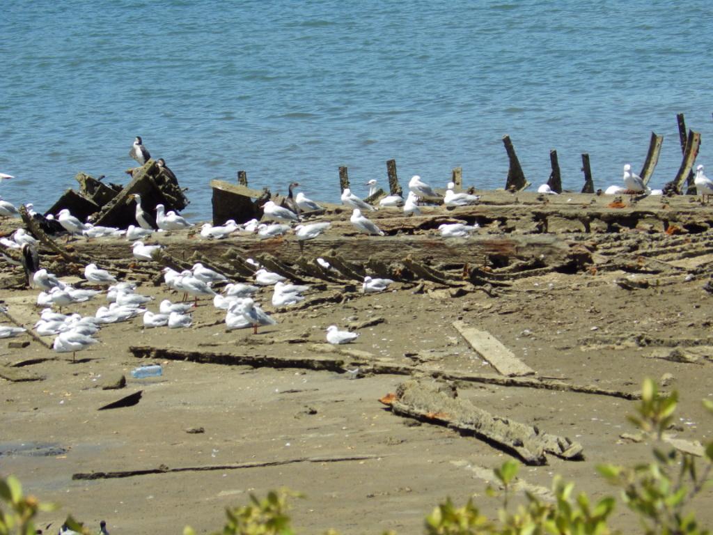 Ships-Graveyard Jervois Basin Port Adelaide