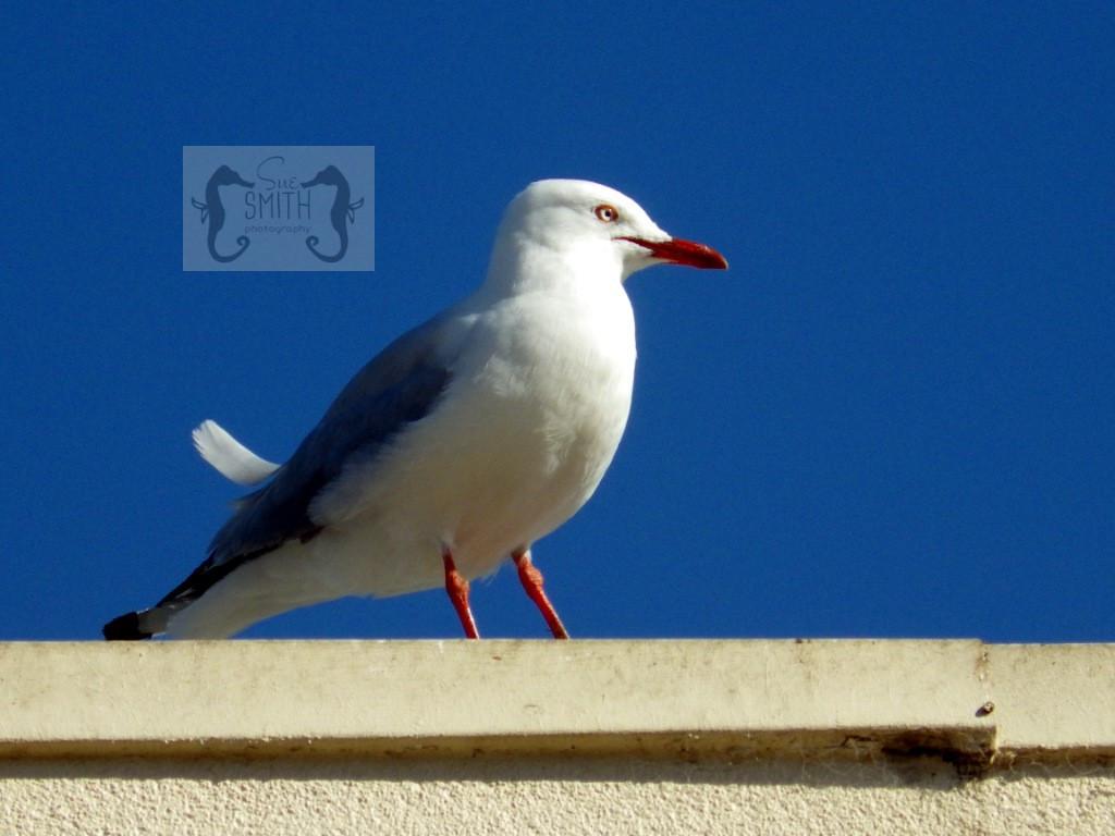 Birds & Seabirds