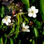 Flowers-Trees-Shrubs